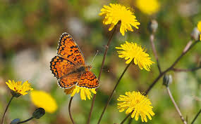 butterfly flowers free photo nature butterfly flowers macro free image on