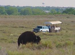 Kansas wildlife tours images Sandsage bison range and wildlife area jpg