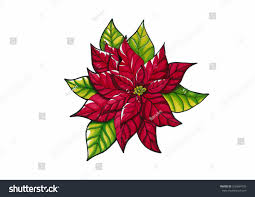 christmas star christmas poinsettia flowers red stock illustration