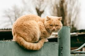 a feral cat or a stray cat how to tell the difference the cat site