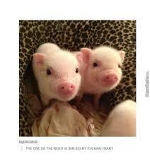 Cute Baby Memes - cute baby pigs by jema5555 meme center