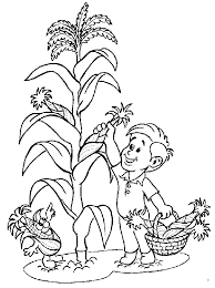 indian corn coloring page 430330