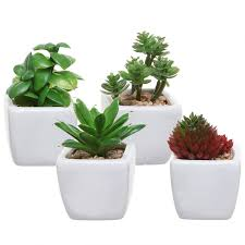 Small Desk Plants 25 Office Plants That Fit On Your Desk Small Business Trends