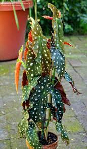 557 best gardening u0026 nature images on pinterest plants indoor