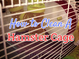 Hamster Cages Cheap How To Clean A Hamster Cage Dwarf Hamster Blog