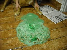 boxer dog kills man how rat poison kills your dog or rat or you virtuavet