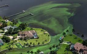 Map Of Stuart Fl Florida Has Confirmed 44 Algae Bloom Sites Some With Toxic Levels