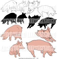 royalty free stock agriculture designs of pigs page 2