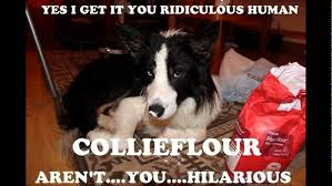Border Collie Meme - border collie meme s youtube