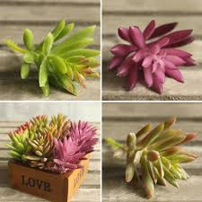 aliexpress com buy snowflake lotus rare plants succulent grass