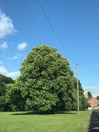 getting to know a tree u2013 whatnaomididnext