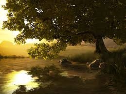 nature 3d screensavers lake tree a wonderful nook of nature on