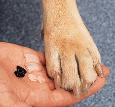 claws nail caps for dogs