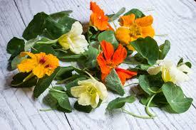 nasturtium flowers edible nasturtium leaves and flowers