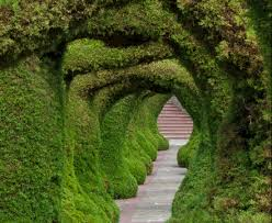 10 breathtaking tree canopies u0026 natural tunnels that look like