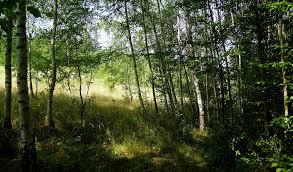 le si e wycinka drzew w prywatnym lesie na jakich zasadach i gdzie uzyskać