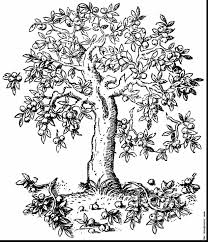 amazing apple tree sketches drawings with apple tree coloring page