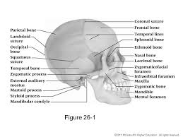 chapter 26 the head face eyes ears nose and throat ppt