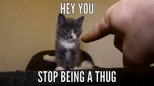 Talking Cat Meme - lol i cant draw but random gibson meme 3 talking kitty cat amino