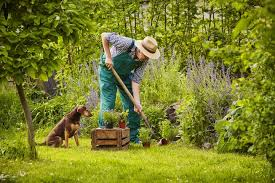 Backyard For Dogs by How To Build The Perfect Backyard For Dogs Mnn Mother Nature