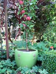 appletree garden designs beautiful landscape design small garden