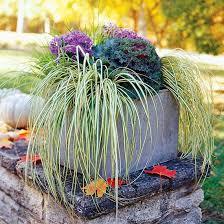 201 best ornamental grasses images on landscaping