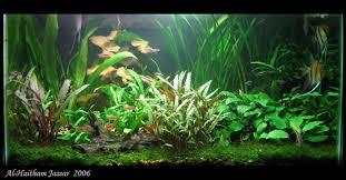 Aquarium Design Exle | non co2 non excel low tech planted tanks the planted tank