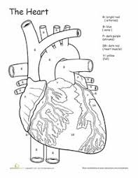 project for awesome human heart coloring pages at best all