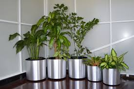 plant u0026 planter lease packages green office barbados