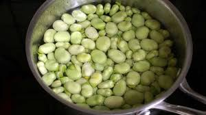 feve cuisine éplucher les fèves et cuisson des fèves recette des fèves cuites à