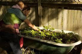 Bathtub Planter Turn An Old Bathtub Into A Potato Planter Treehugger