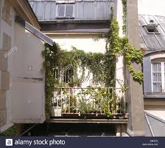 climbing plants on walls above small balcony of paris apartment