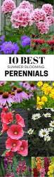 best 25 best perennials ideas only on pinterest perennial