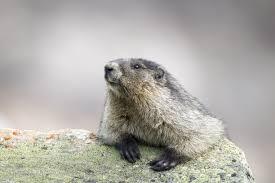 groundhog 3 times holiday terribly wrong