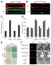 dynamic auxin responsive plasma membrane to nucleus movement of
