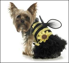 Halloween Costumes Yorkies Chiwawa Dog Halloween Costumes Dog Pet Photos Gallery Zp3elo72wm