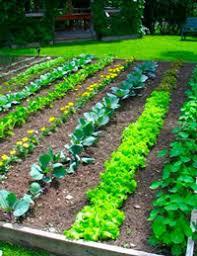 Garden Mulch Types - much mulch soil types you u0027ll want in your vegetable garden