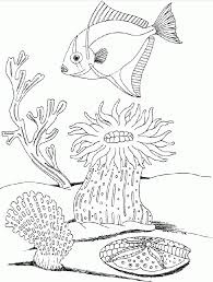 sea plants coloring pages free ocean life coloring pages coloring home