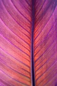 radiant orchid home decor 181 best pantone color of the years past images on pinterest