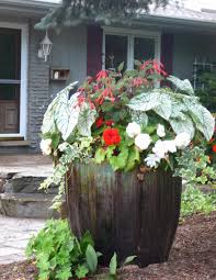 patio plants home design ideas and pictures