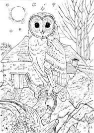 printable coloring pages adults printable coloring pages for adults 15 free designs free design