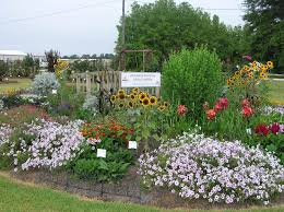 Osu Botanical Gardens by Where Can I Find An Aas Display Garden All America Selections