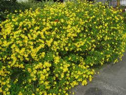 Garden Plants Names And Pictures by Exotic Shrubs The Trees U0026 Flowers Of Whangarei