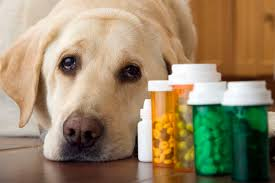 vet pharmaceutical sales rep cover letter