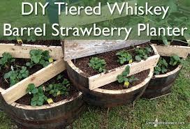 tiered whiskey barrel strawberry planter diy