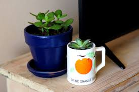 decorate your home with houseplants without spending a fortune