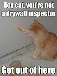 Drywall Meme - hey cat you re not a drywall inspector get out of here drywall