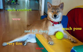 Meme Sleepy - doge sleepy doge pinterest doge memes and meme