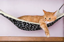 cat beds ebay
