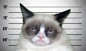Original Grumpy Cat Meme - letterology grumpy cats and children